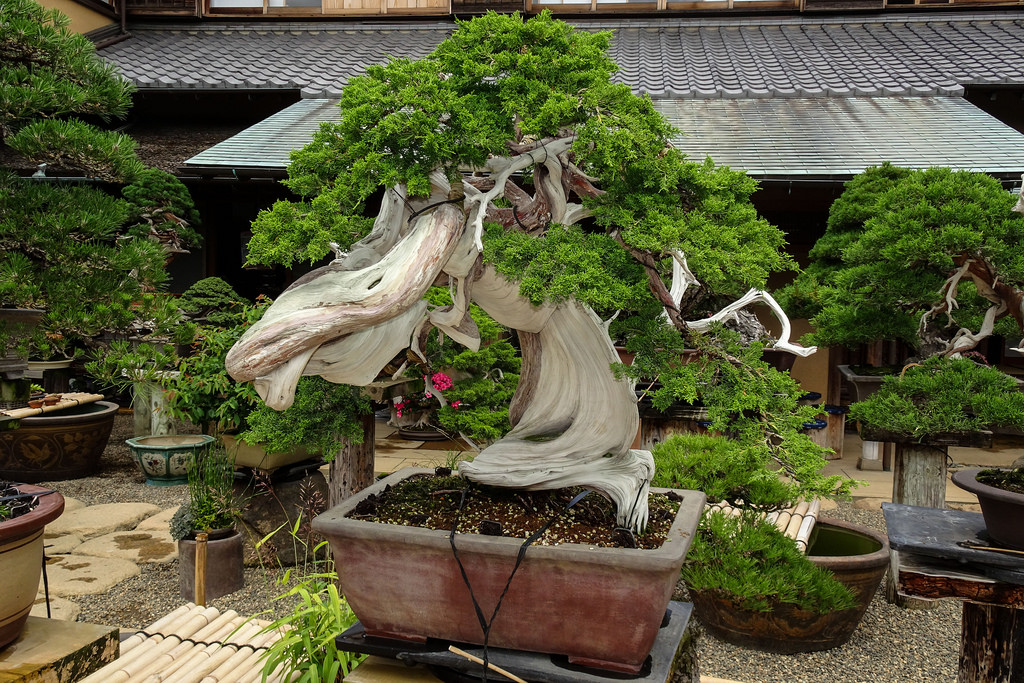Shunkaen bonsai Museum, Japan's famous museum