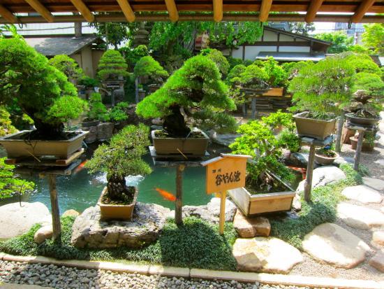 Shunkaen bonsai Museum, Japan's famous museumpiccc